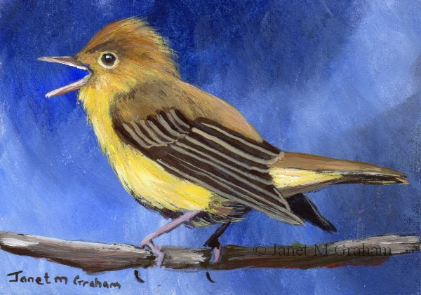 """Icterine Warbler ACEO"" original fine art by Janet Graham"