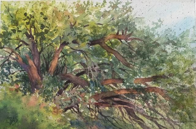 """""""OLD MULBERRY"""" original fine art by Barbara Scheihing"""
