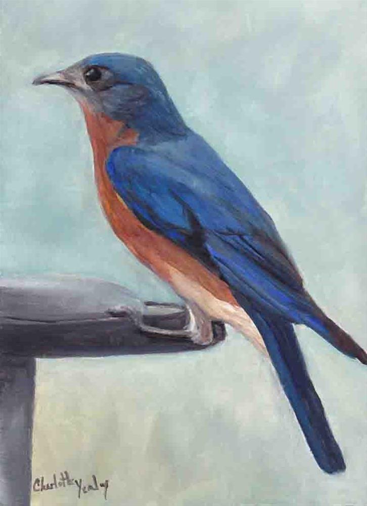 """Bluebird"" original fine art by Charlotte Yealey"