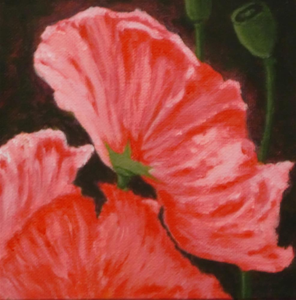 """Iceland Poppy"" original fine art by karen richardson"