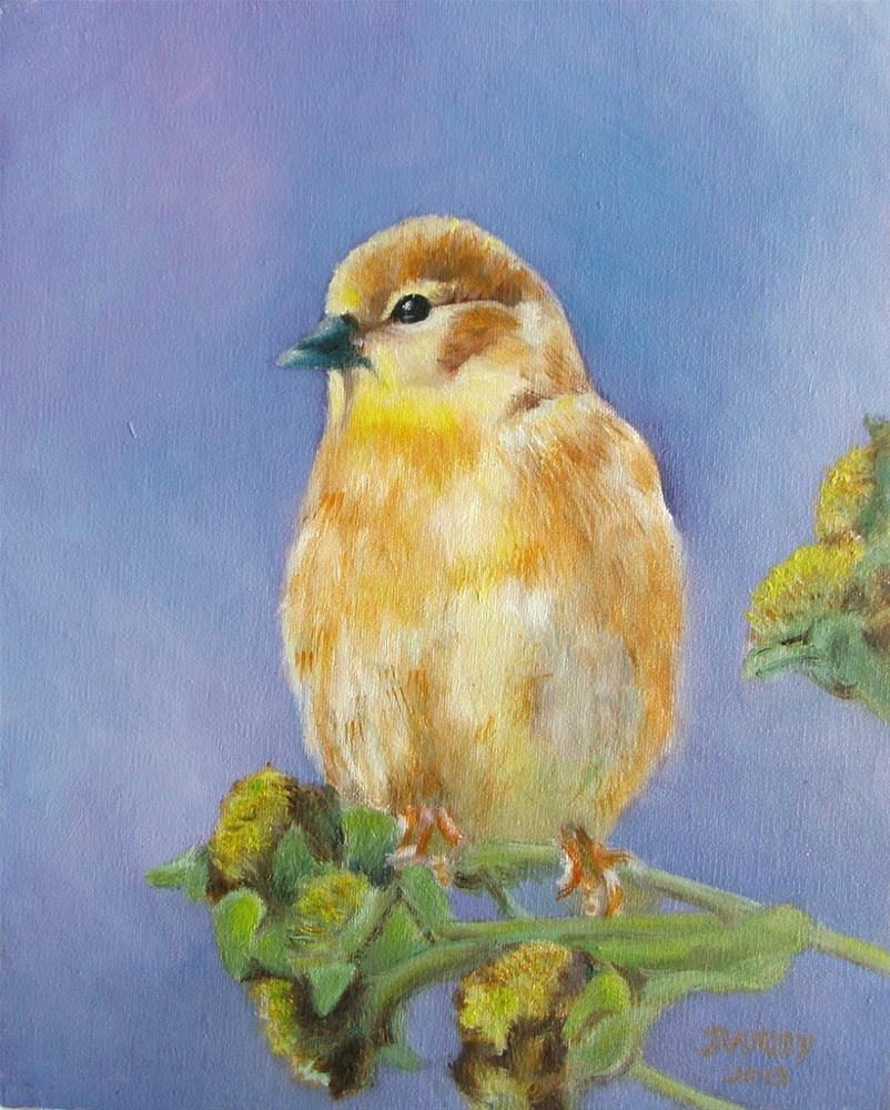 """Fluffy Finch"" original fine art by Lynn Darby"