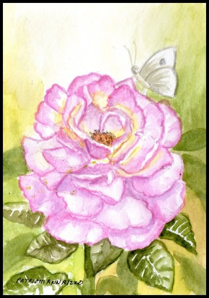 """A Fresh new Garden Rose"" original fine art by Patricia Ann Rizzo"