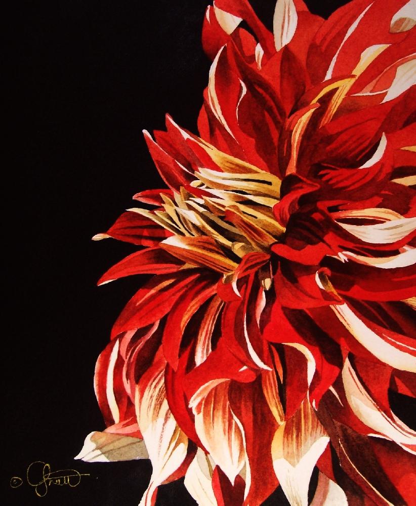 """Red & White Dahlia"" original fine art by Jacqueline Gnott, whs"