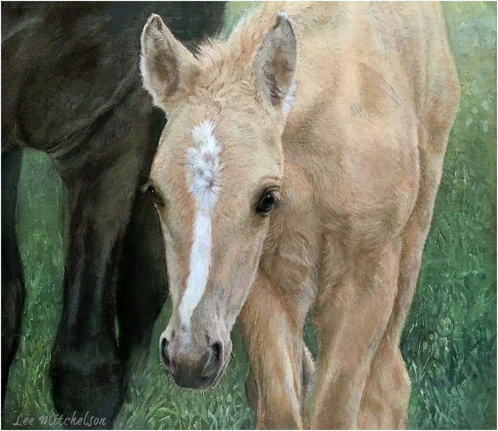 """Precious Little One Kiger Foal"" original fine art by Lee Mitchelson"