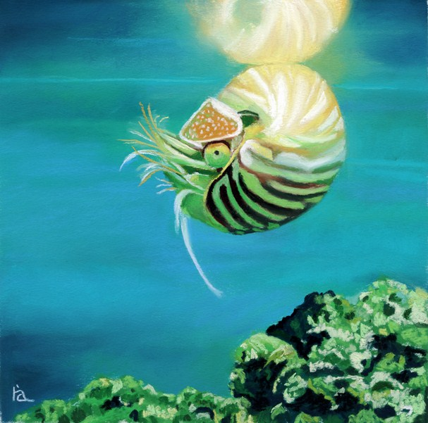 Nautilus original fine art by Ria Hills