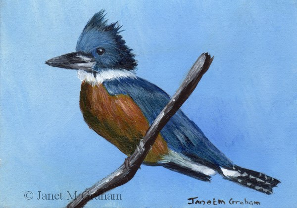 """Ringed Kingfisher ACEO"" original fine art by Janet Graham"