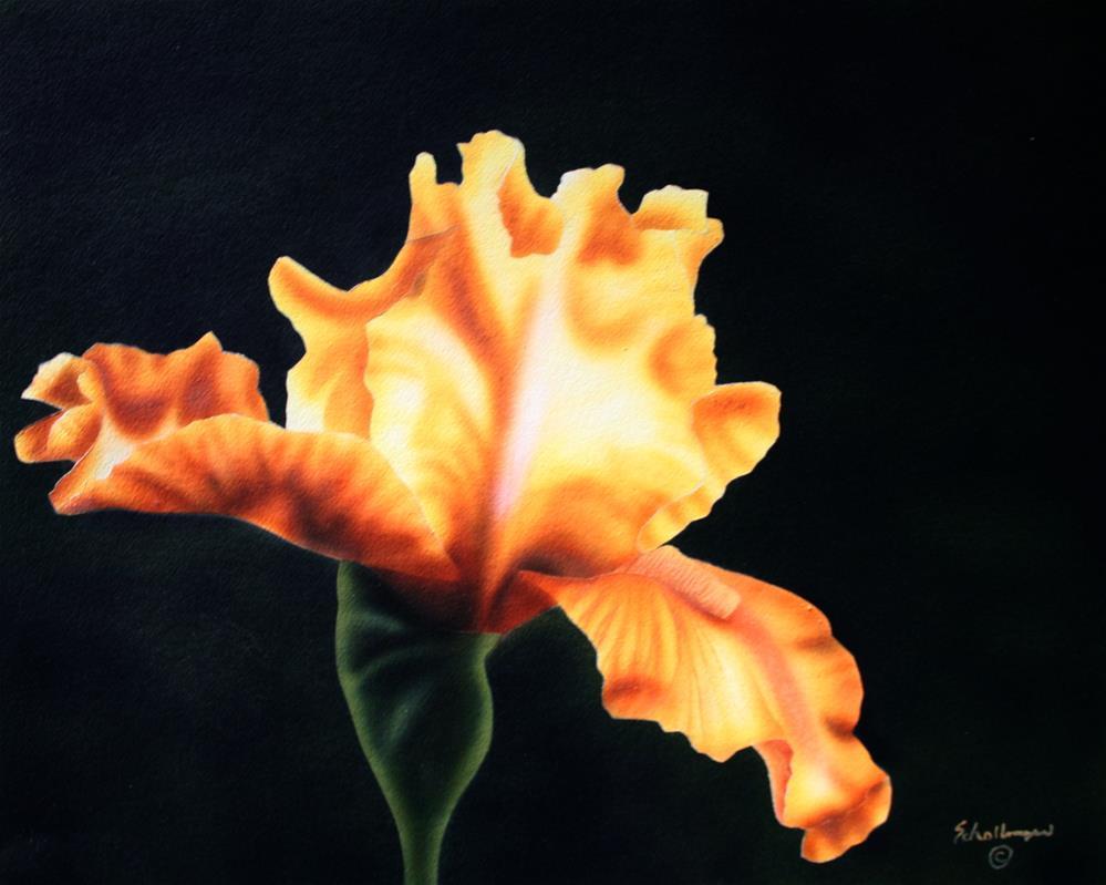 """Golden Iris"" original fine art by Fred Schollmeyer"