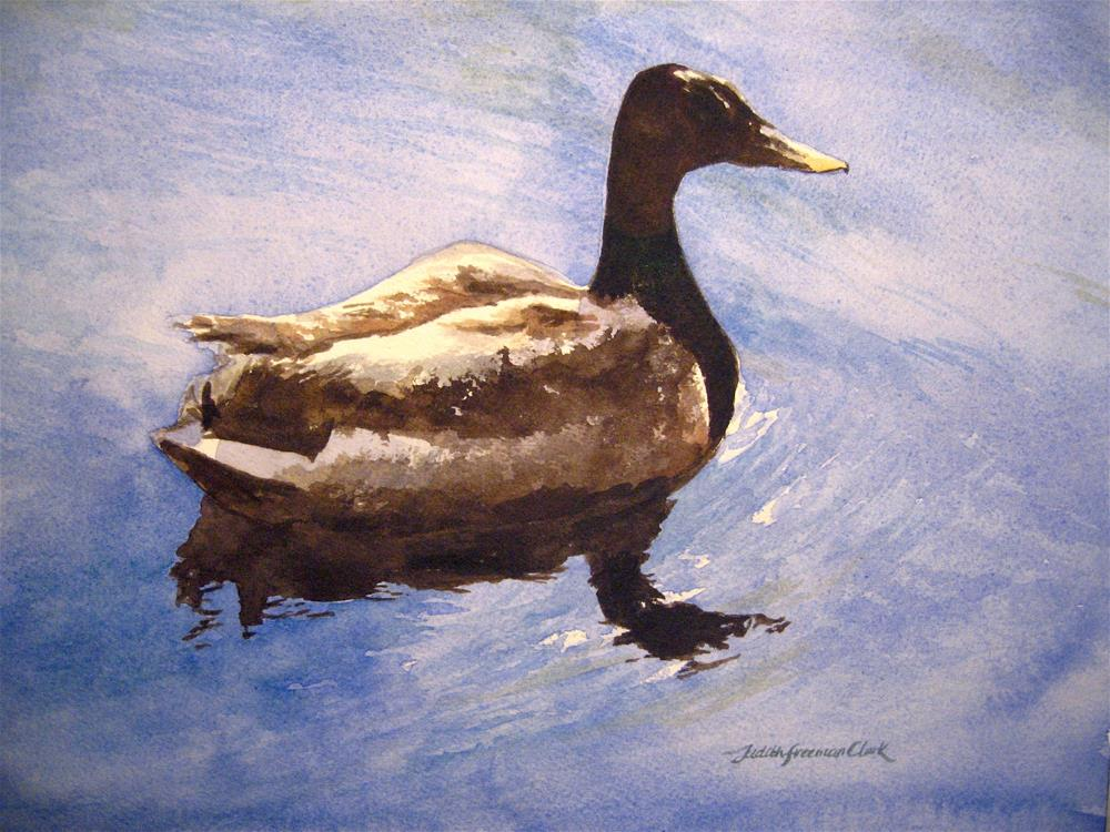 """Male Duck, study"" original fine art by Judith Freeman Clark"