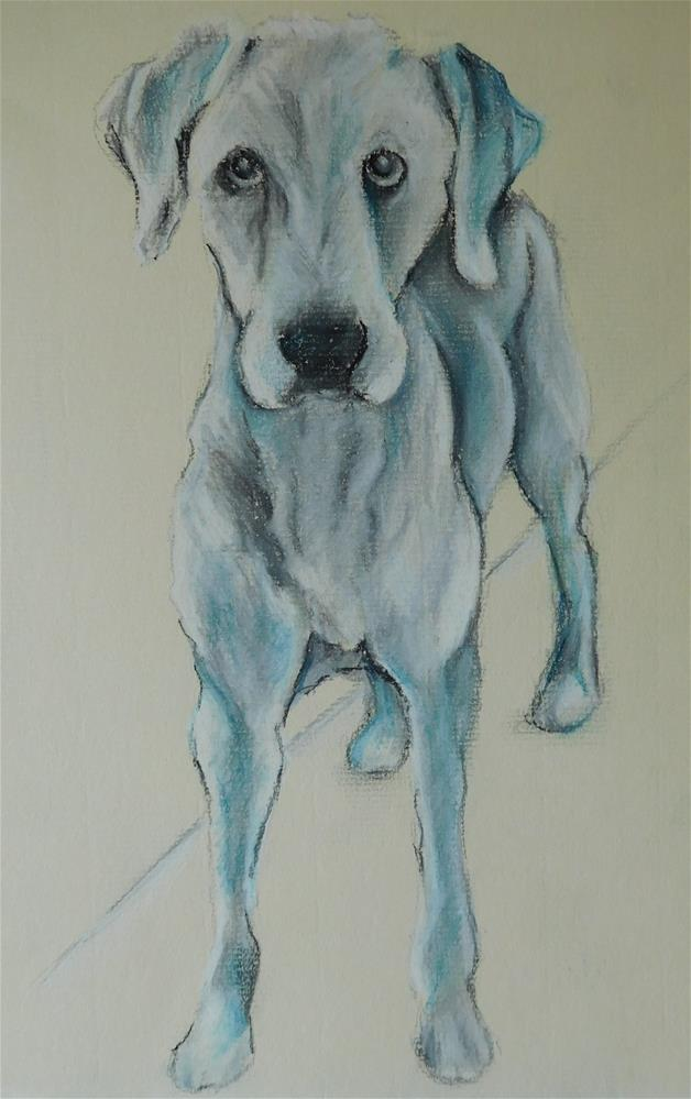 """Mack (Dog Sketch 4)"" original fine art by Daryl West"