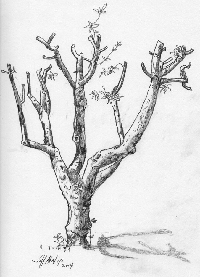 """Pruned Apple Tree"" original fine art by Jeff Atnip"
