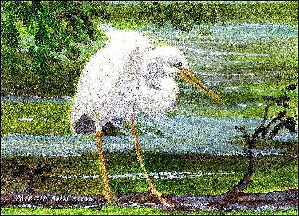 """Great Egret 2"" original fine art by Patricia Ann Rizzo"