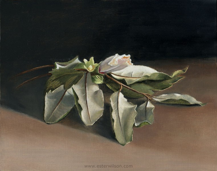 """White Leaves"" original fine art by Ester Wilson"