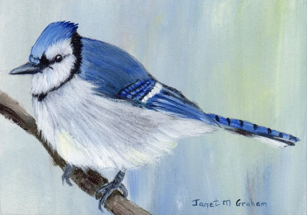 """Blue Jay ACEO"" original fine art by Janet Graham"