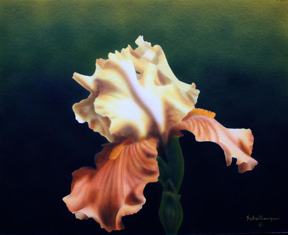 """April Iris"" original fine art by Fred Schollmeyer"