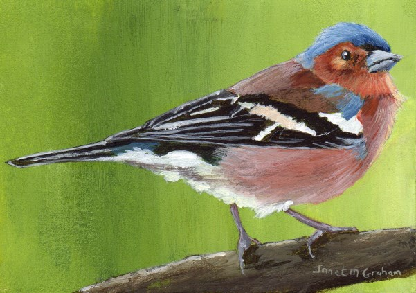 """Chaffinch ACEO"" original fine art by Janet Graham"