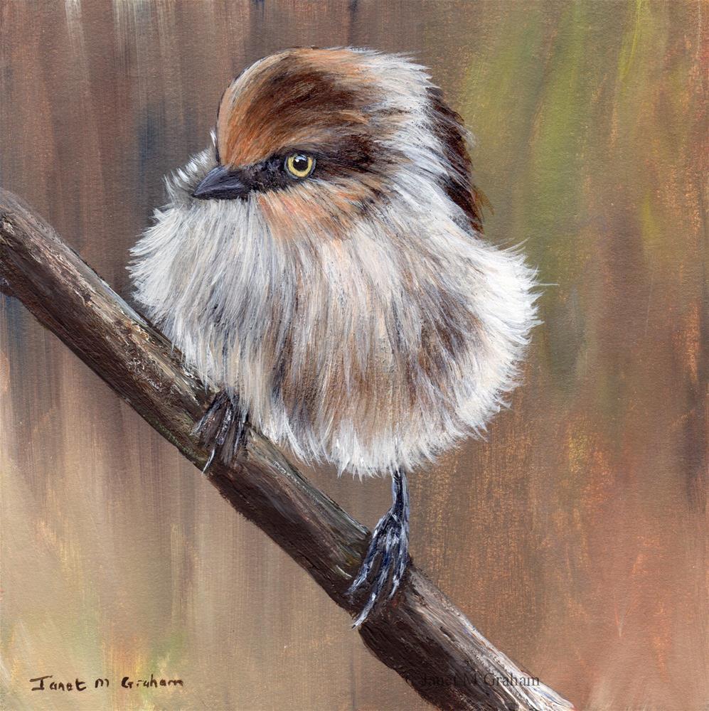 """""""Bushtit"""" original fine art by Janet Graham"""