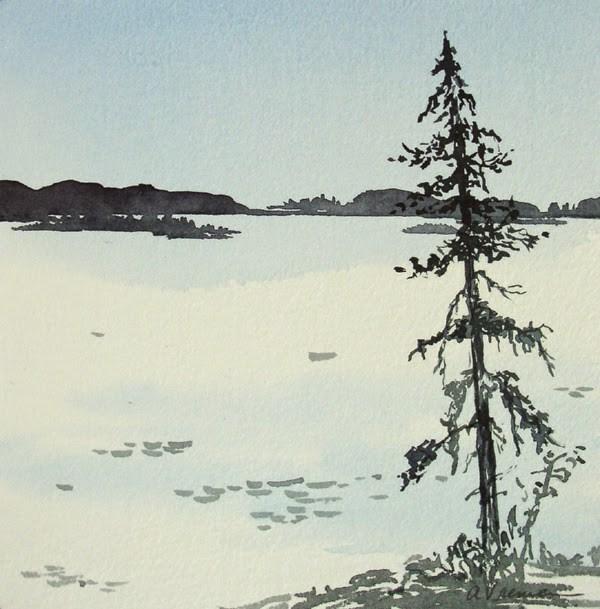 """""""Black Spruce"""" original fine art by Anna Vreman"""