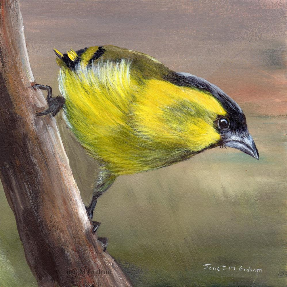 """Siskin"" original fine art by Janet Graham"