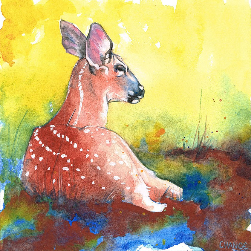 """Fawn"" original fine art by Annabel Chance"