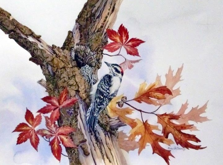"""Downy Woodpecker"" original fine art by Jean Pierre DeBernay"