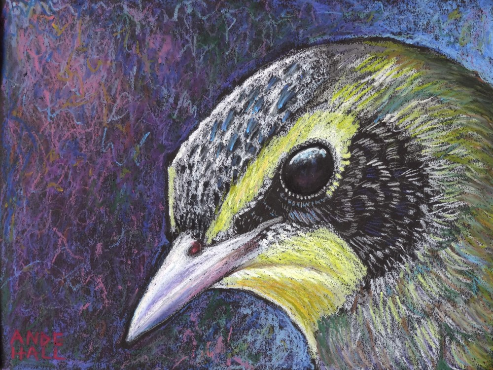 """Kentucky Warbler Portrait"" original fine art by Ande Hall"