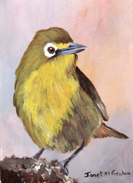 """Cape White Eye ACEO"" original fine art by Janet Graham"