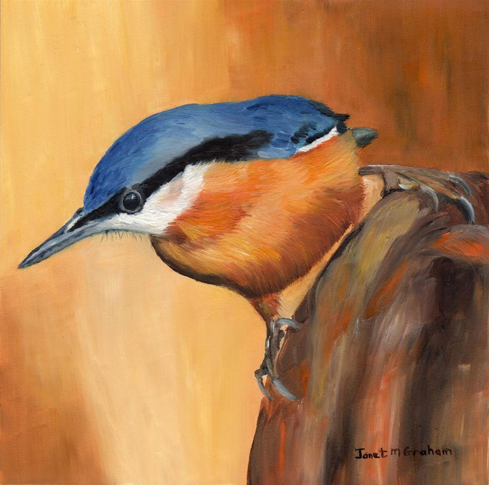 """Nuthatch"" original fine art by Janet Graham"