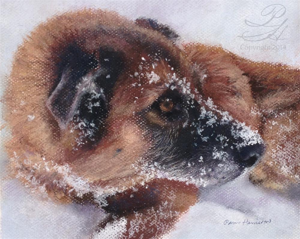 """Roscoe"" original fine art by Pamela Hamilton"