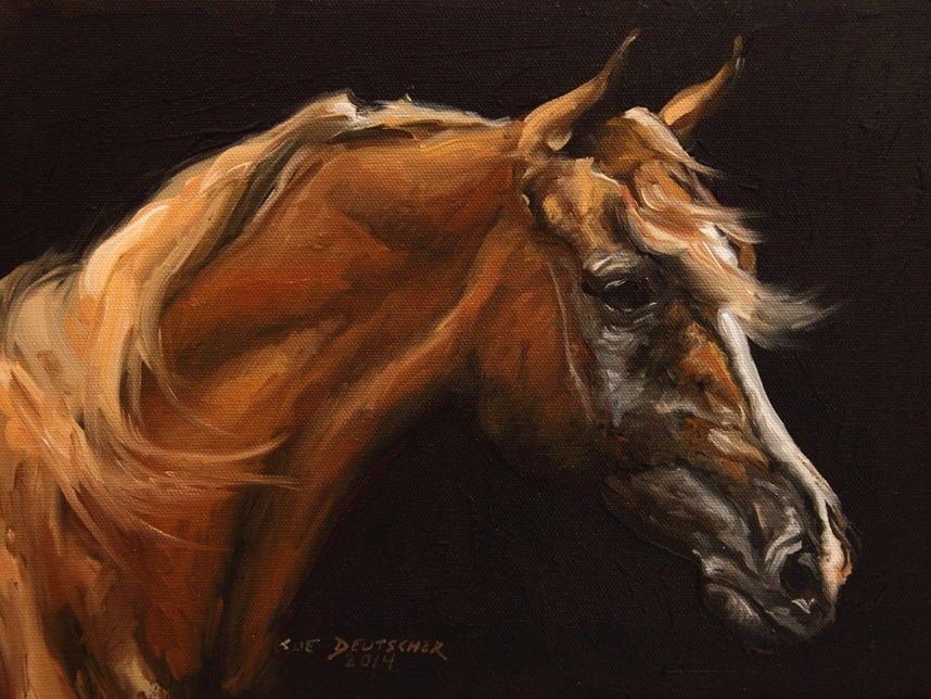 """Arabian Horse"" original fine art by Sue Deutscher"