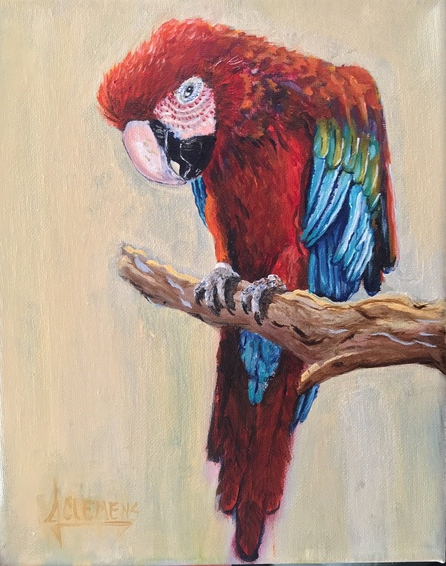 """Bird study - Macaw"" original fine art by Jolynn Clemens"