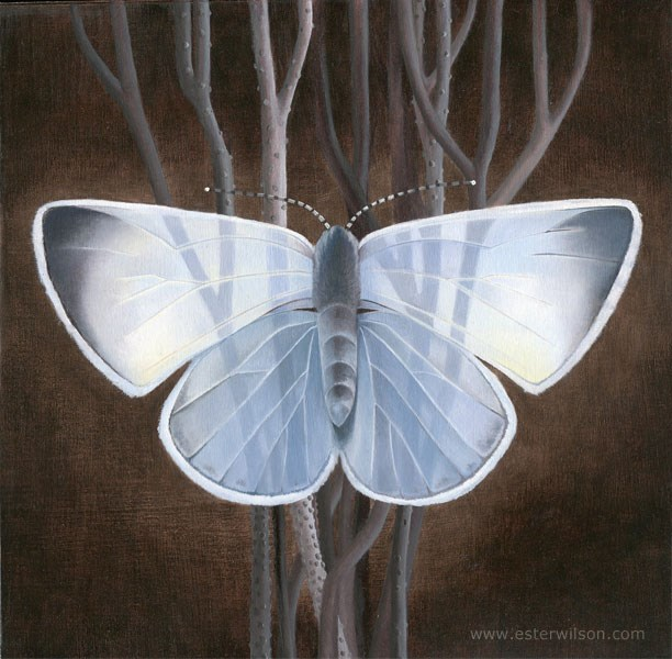 """Blue Moth"" original fine art by Ester Wilson"