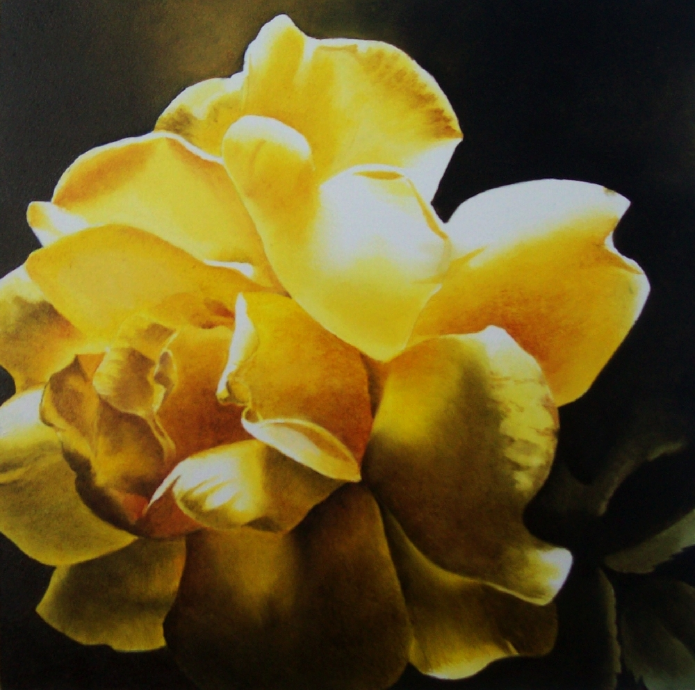 """Last Light, Yellow Rose"" original fine art by Jacqueline Gnott, whs"