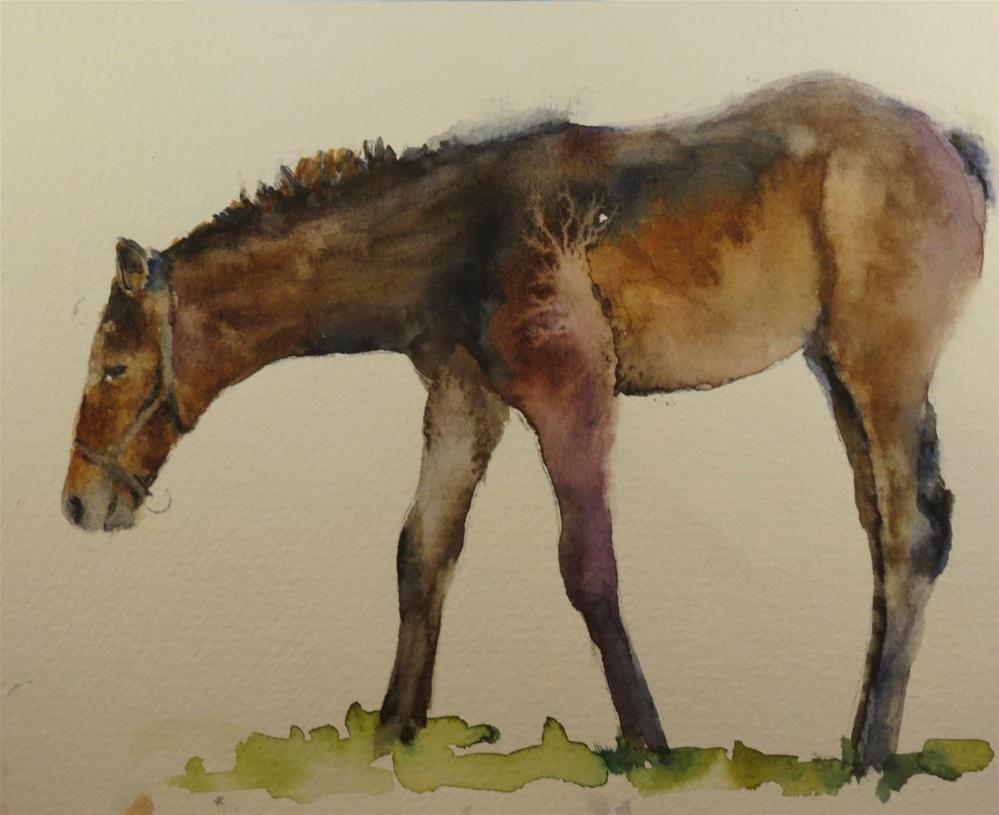 """Horse Study"" original fine art by Sue Churchgrant"