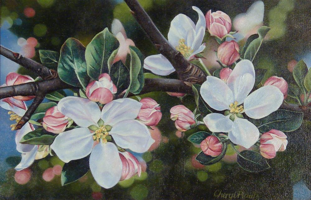 """Apple Blossoms"" original fine art by Cheryl Plautz"