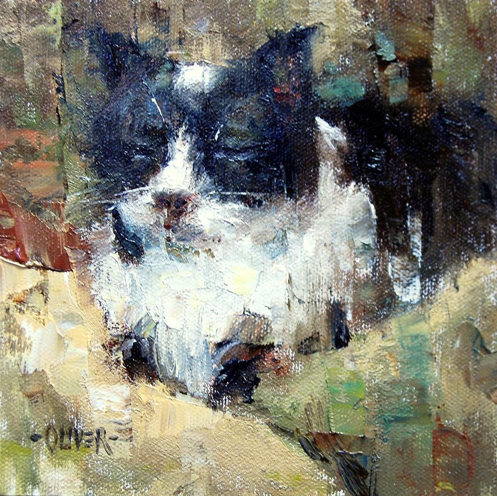 """""""Sleeping Cat"""" original fine art by Julie Ford Oliver"""