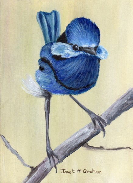 """Splendid Fairy Wren ACEO"" original fine art by Janet Graham"