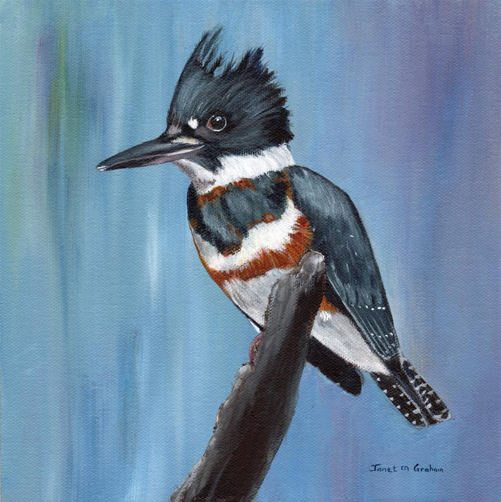 """Belted Kingfisher"" original fine art by Janet Graham"