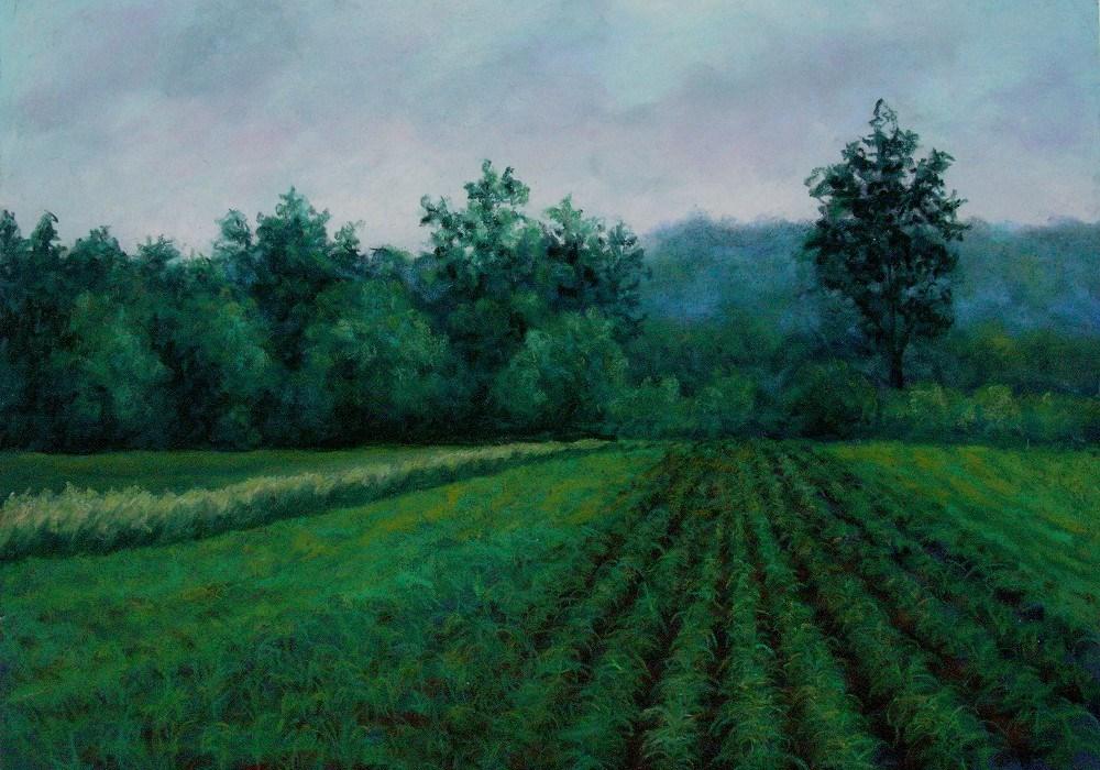 """""""Early Summer Corn Field"""" original fine art by Susan Klabak"""
