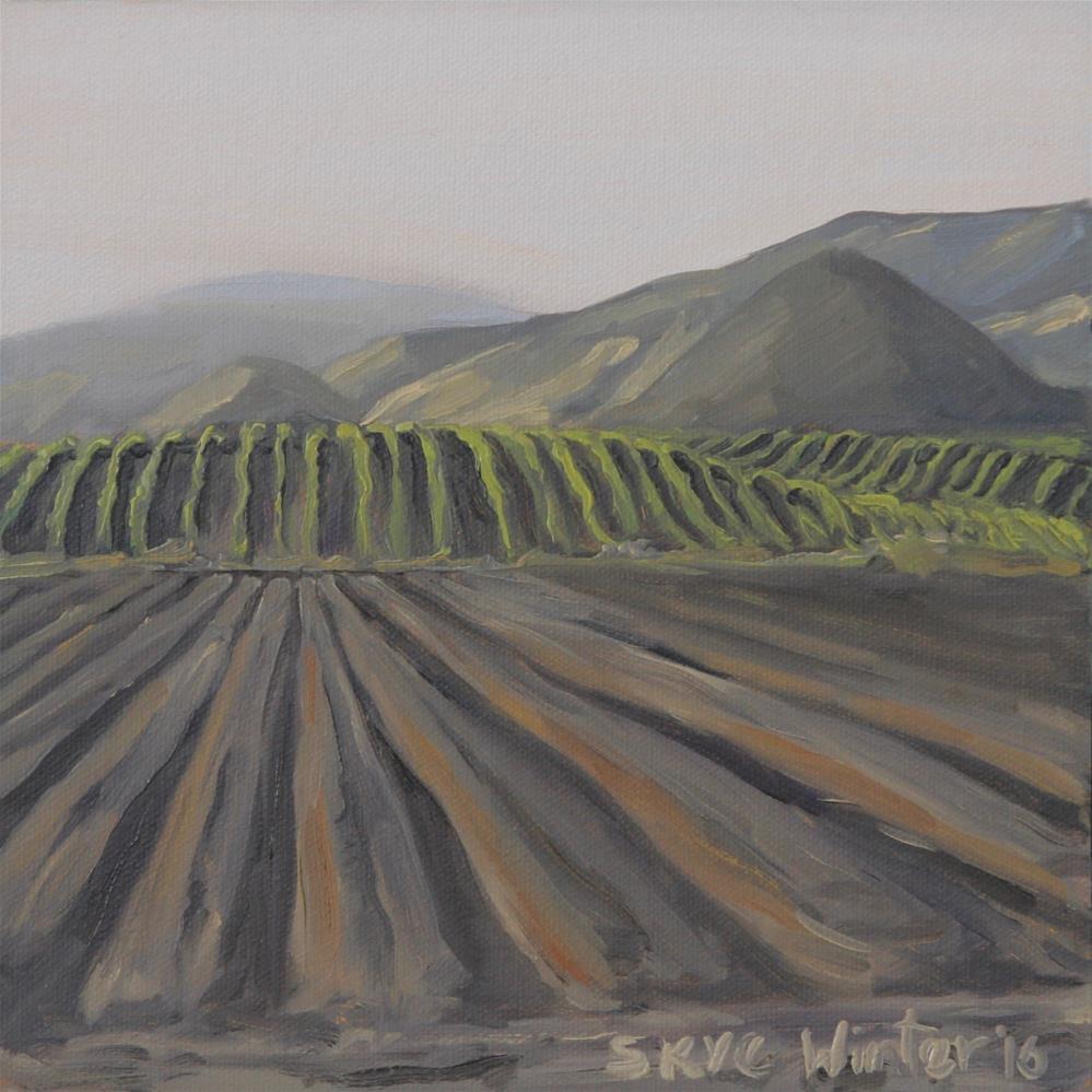 """Furrows"" original fine art by Skye Coddington"
