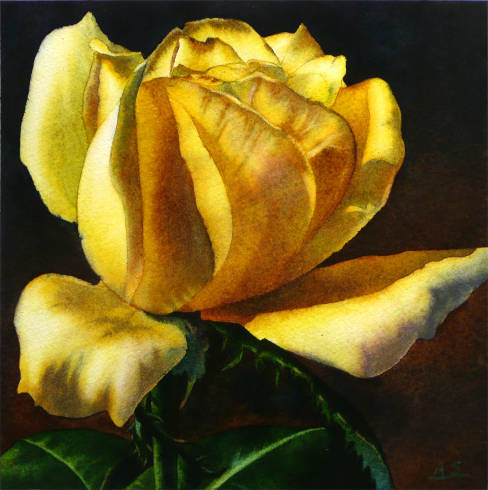 """Yellow Rose"" original fine art by Arena Shawn"