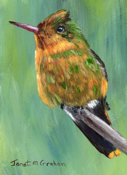 """Tufted Coquette ACEO"" original fine art by Janet Graham"
