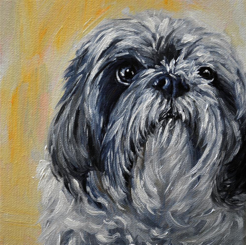 """""""shitzu, shihtzu dog art"""" original fine art by Sun Sohovich"""