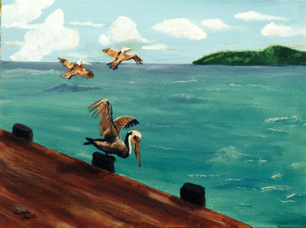 """Brown Pelicans"" original fine art by Brenda Smith"