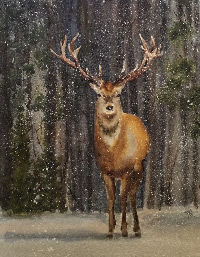 """North American Elk"" original fine art by June Rollins"