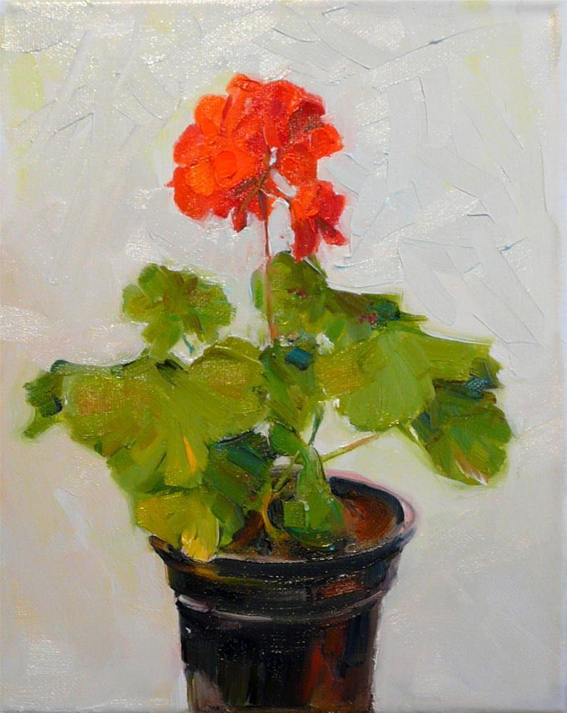 """Geranium in Black Pot,still life,oil on canvas,10x8,price$250"" original fine art by Joy Olney"