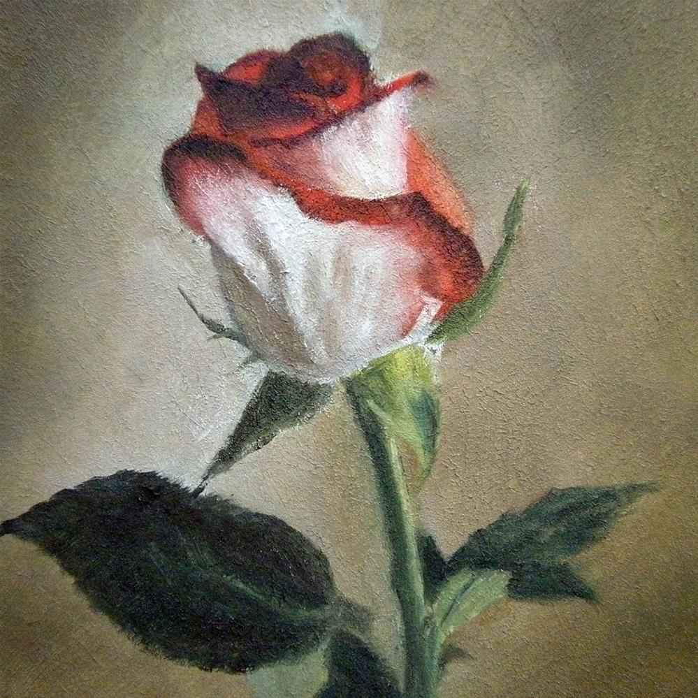"""Blush Rose"" original fine art by Jill Brabant"