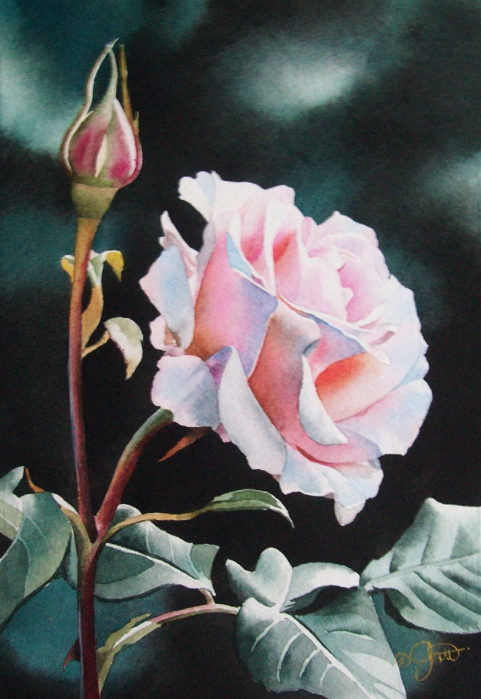"""Pink Rose in Morning Light"" original fine art by Jacqueline Gnott, whs"