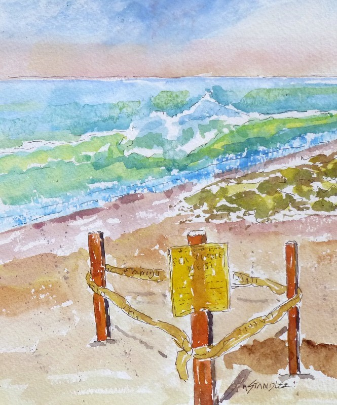 """Sea Turtle Nests 13092"" original fine art by Nancy Standlee"