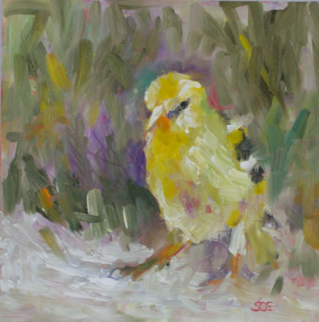 """Goldfinch Study"" original fine art by Sue Churchgrant"