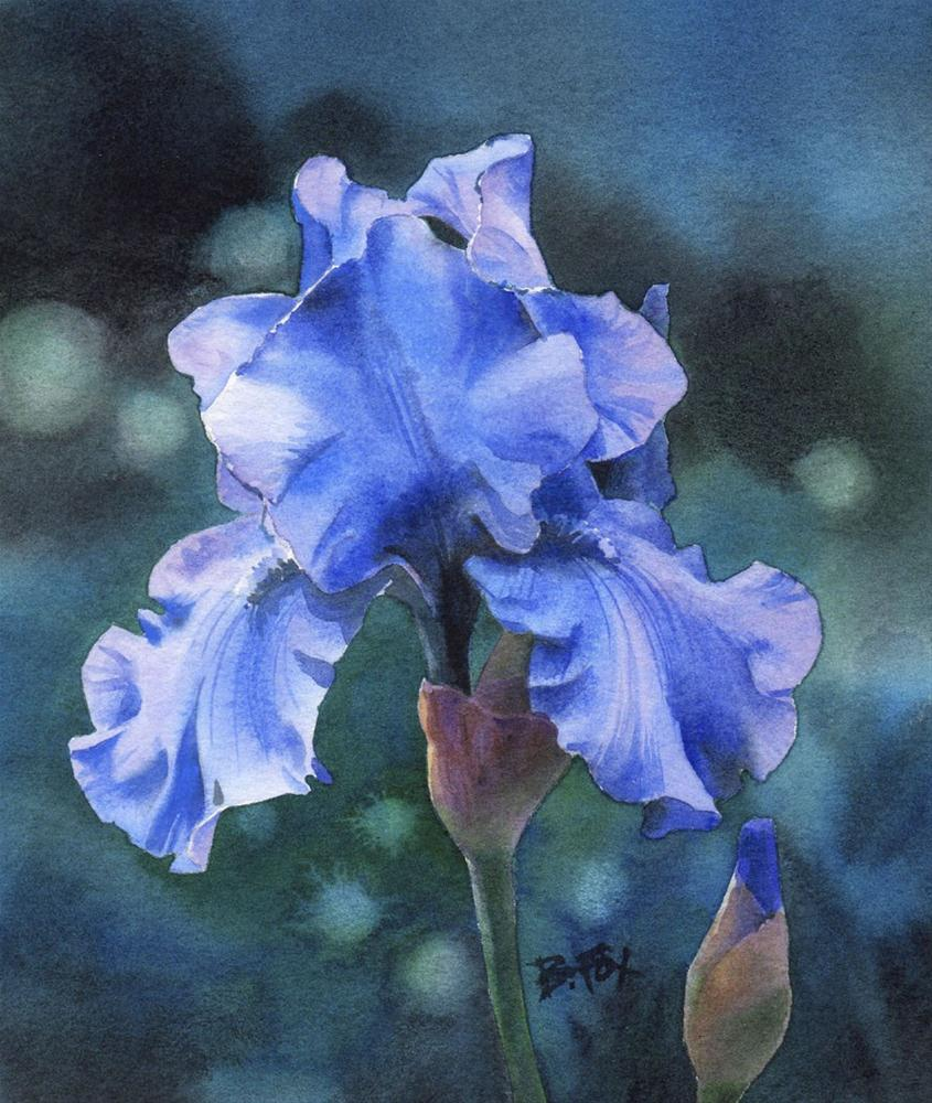 BLUE VELVET (SOLD) watercolor Iris floral painting original fine art by Barbara Fox